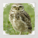 Alert Owl Invitations