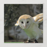 Barn Owl Invitation