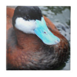 Blue Billed Duck Tile