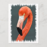 Brilliant Flamingo Postcard