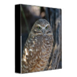 Burrowing Owl 3 Ring Binder
