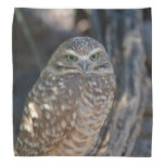 Burrowing Owl Bandana