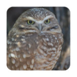 Burrowing Owl Coaster