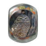 Burrowing Owl Glass Candy Jars