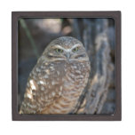 Burrowing Owl Jewelry Box