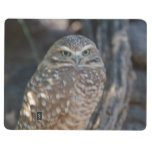 Burrowing Owl Journal