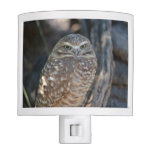 Burrowing Owl Night Light