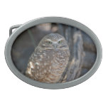 Burrowing Owl Oval Belt Buckle