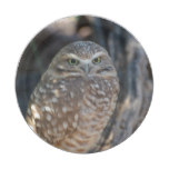Burrowing Owl Paper Plate