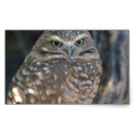 Burrowing Owl Rectangular Sticker