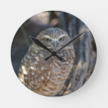 Burrowing Owl Round Clock
