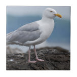 Coastal Seagull Ceramic Tile