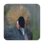 Curious African Crowned Crane Coaster
