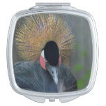 Curious African Crowned Crane Compact Mirror