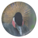Curious African Crowned Crane Dinner Plate