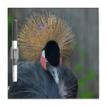 Curious African Crowned Crane Dry Erase Board
