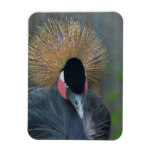 Curious African Crowned Crane Magnet