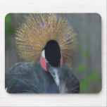 Curious African Crowned Crane Mouse Pad