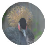 Curious African Crowned Crane Plate