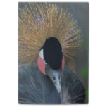 Curious African Crowned Crane Post-it Notes