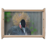 Curious African Crowned Crane Serving Tray