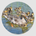 Duck Family Stickers