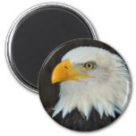 Eagle Head Magnet