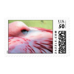 Flamingo Feathers Postage Stamp