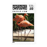Flock of Flamingos Postage Stamp
