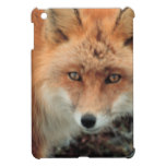 Fox Den iPad Mini Cover