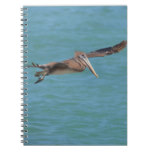 Gliding Pelican Notebook