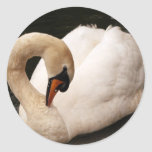 Graceful Swan  Stickers