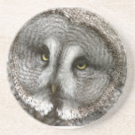 Great Grey Owl Coaster