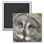 Great Grey Owl Magnet
