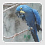 Hyacinth Macaw Stickers