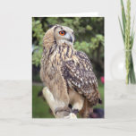 Large Owl on Fence Greeting Cards