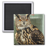 Long Eared Owl Magnet