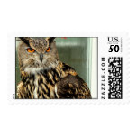 Long Eared Owl Postage Stamp