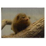 Mongoose a Tree Branch Cutting Board