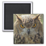 Owl Photo Square Magnet