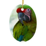 parrot-63.jpg ceramic ornament