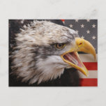 Patriotic Eagle Image Postcard