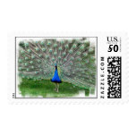 Peacock Plume Postage Stamp