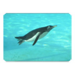 Penguin Swimming Underwater Invitation