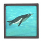 Penguin Swimming Underwater Keepsake Box