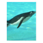 Penguin Swimming Underwater Postcard