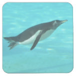 Penguin Swimming Underwater Square Paper Coaster