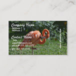 Perfect Pink Flamingo Business Card
