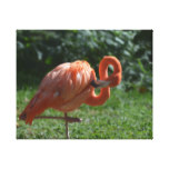 Perfect Pink Flamingo Canvas Print