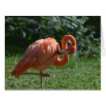 Perfect Pink Flamingo Card